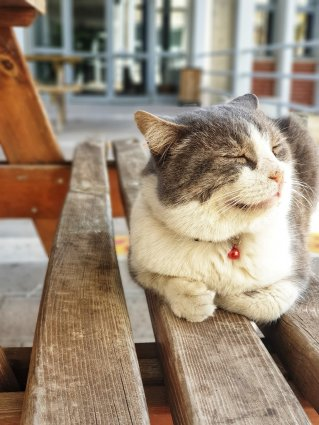 Image depicts a white and gray cat sitting on a bench with paws tucked under, smiling