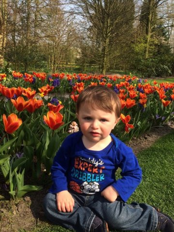 Toddler and tulips in Amsterdam