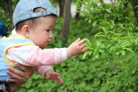 Baby and Nature