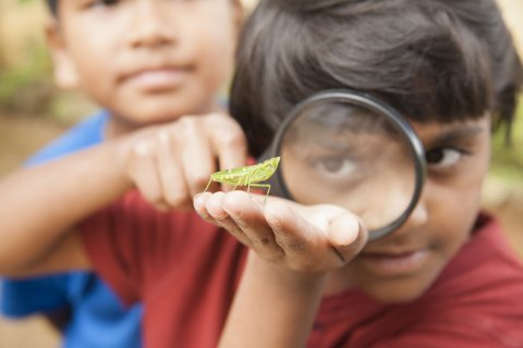 Child looks at grasshopper through magnifying glass