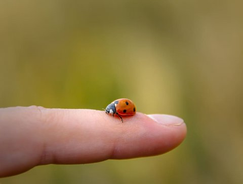 child's finger with a ladybug on it